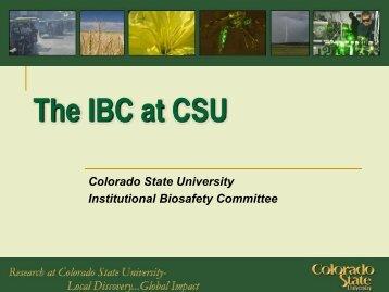 The IBC at CSU