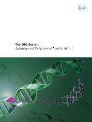 Labeling and Detection of Nucleic Acids