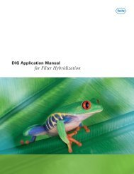 DIG Application Manual for Filter Hybridization - Roche Applied ...