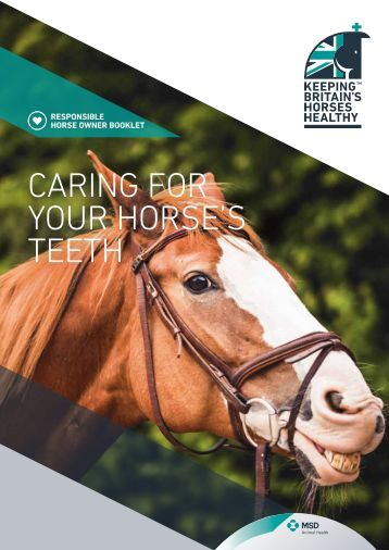 CARING FOR YOUR HORSE'S TEETH