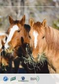 CARING FOR YOUR HORSE'S TEETH - Page 2