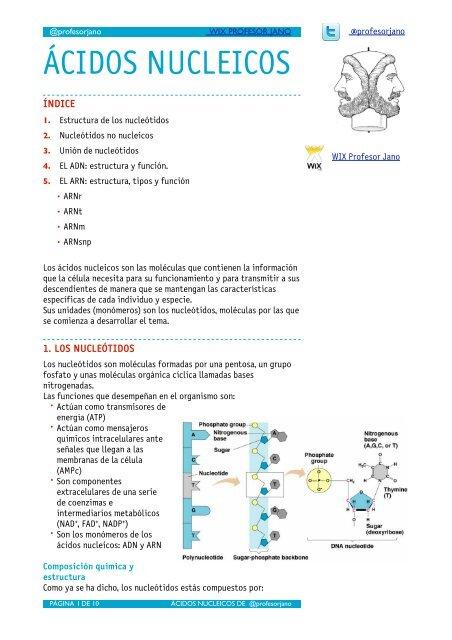 ácidos Nucleicos Apuntes