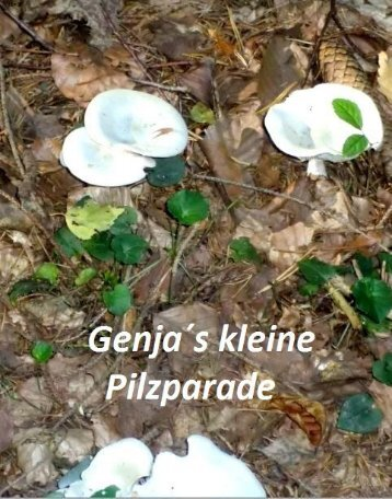 Kleine Pilzparade