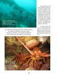 Isla Natividad - Page 5