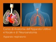 Corso di Anatomia dell'Apparato Uditivo e Vocale e di Neuroanatomia