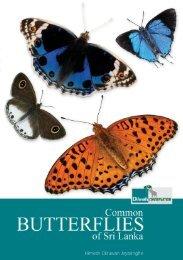 Common Butterflies of Sri Lanka