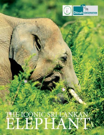 The Iconic Sri Lankan Elephant