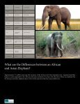 The Iconic Sri Lankan Elephant - Page 6