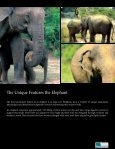 The Iconic Sri Lankan Elephant - Page 7