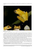 Identification of Novel Species by Herpetological Foundation of Sri Lanka in Collaboration with Dilmah Conservation - Page 5