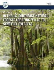 In the U.S Southeast Natural Forests Are Being Felled to Send Fuel Overseas