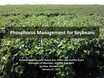 Phosphorus Management for Soybeans