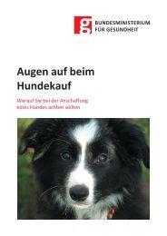 Augen auf beim Hundkauf! Worauf Sie bei der Anschaffung eines Hundes achten sollten