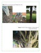 rbol, Ciencias Naturales - Page 4