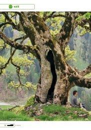 Berg-Ahorn - Robin Wood