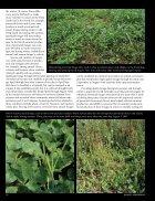 Annuals-vs.-Perennials - Page 3