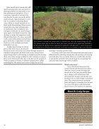Annuals-vs.-Perennials - Page 6
