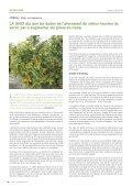 MENYS PRODUCCIÓ A L'ESPERA DE MILLOR PREU - Page 6