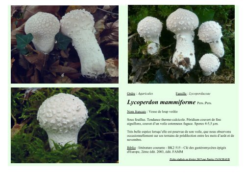 Lycoperdon mammiforme Pers.:Pers.
