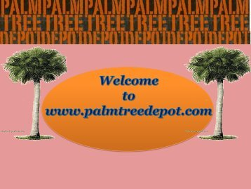 Things to Consider Before Buying Palm Trees for Landscaping