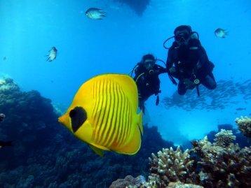 deutsche in tauchschule hurghada www.divingforever