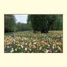 Blumen  - Seite 6