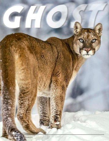ghost-cat