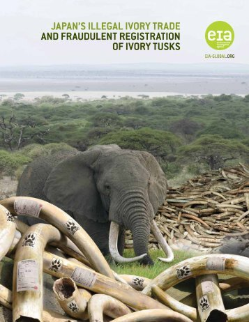 Japan's Illegal Ivory Trade and Fraudulent Registration of Ivory Tusks