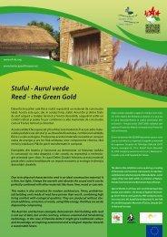 Stuful - Aurul verde Reed