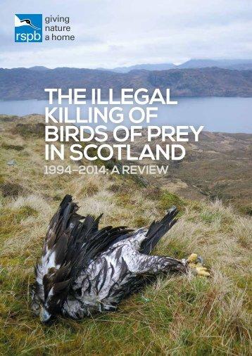 BIRDS OF PREY IN SCOTLAND