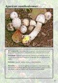 Setas Tóxicas en el Pirineo - Page 3