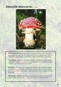 Setas Tóxicas en el Pirineo - Page 4