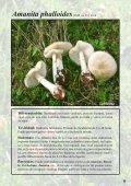 Setas Tóxicas en el Pirineo - Page 6