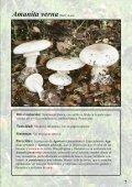 Setas Tóxicas en el Pirineo - Page 7