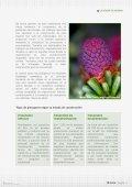 boletin - Page 6