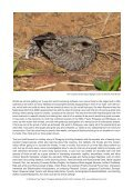 PARAGUAY NEOTROPICAL BIRD CLUB FUNDRAISER - Page 2