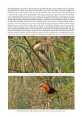 PARAGUAY NEOTROPICAL BIRD CLUB FUNDRAISER - Page 3