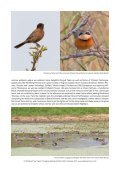 PARAGUAY NEOTROPICAL BIRD CLUB FUNDRAISER - Page 5