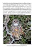 PARAGUAY NEOTROPICAL BIRD CLUB FUNDRAISER - Page 6