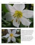 Bulb Log Diary - Page 4