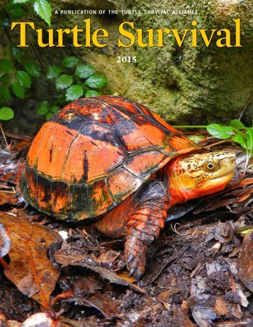 Turtle Survival