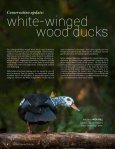 waterfowl - Page 4