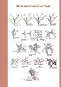 PROTECTION RAISONNEE ET BIOLOGIQUE DES OLIVIERS - Page 4