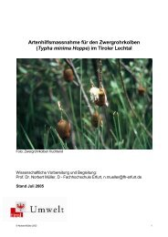 (Typha minima Hoppe ) im Tiroler Lechtal - Naturpark Tiroler Lech