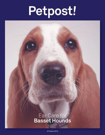 Ear Care for Basset Hounds