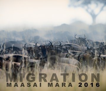 MIGRATION - Maasai Mara 2016