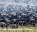 MIGRATION - Maasai Mara 2016 - Page 5