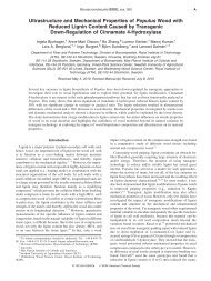 Ultrastructure and Mechanical Properties of Populus Wood with ...