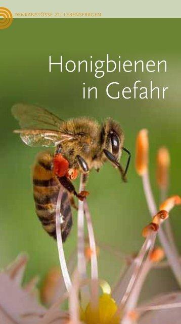 Honigbienen in Gefahr
