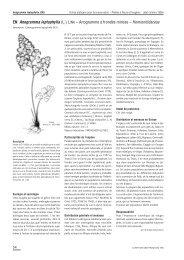 Anogramme à frondes minces – Hemionitidaceae